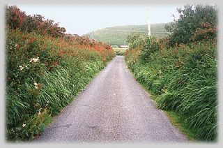 narrow-irish-road